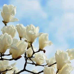 それでも花は咲き鳥は唄う