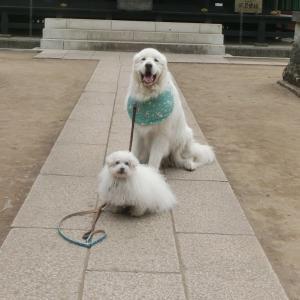 犬と過ごす北軽井沢ライフ