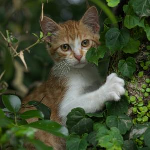 野良猫たちの風景