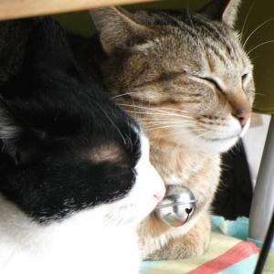 【タロハルブログ】保護犬・保護猫と暮らす