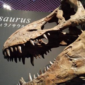 恐竜・白亜紀ゆるゆる学び録