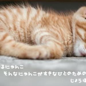 誰も教えてくれない猫の話