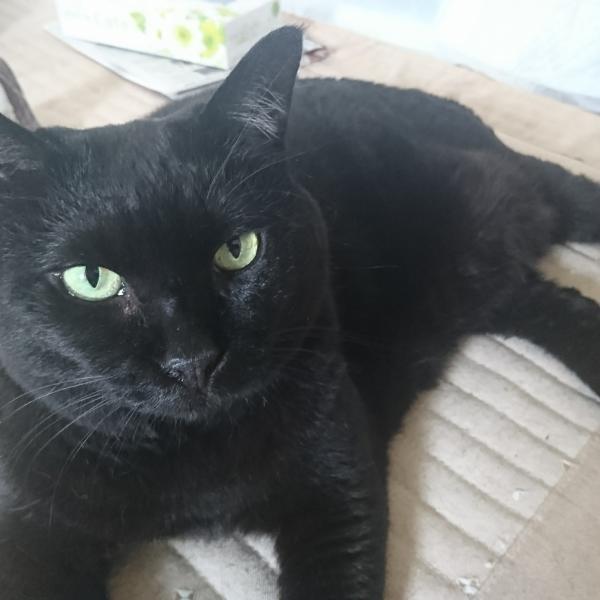 猫好きな健ちゃんさんのプロフィール