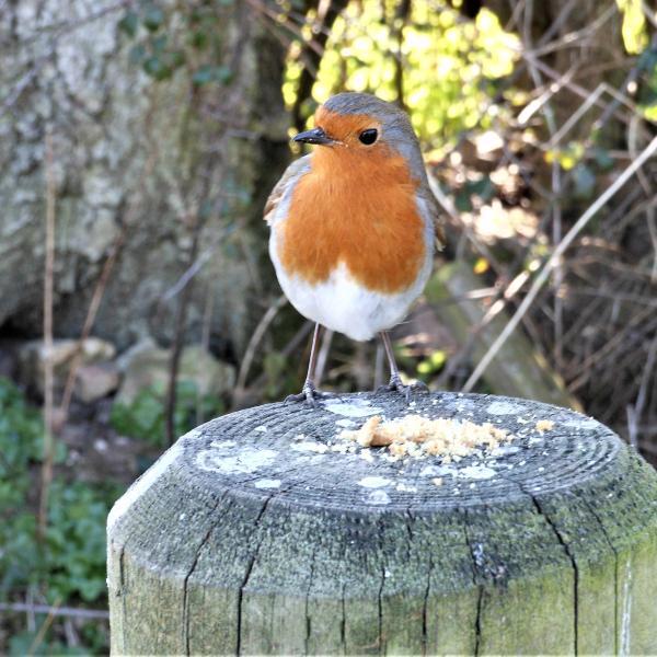 Robinさんのプロフィール