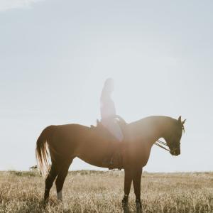 趣味の乗馬ブログ