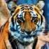 おっさんの虎(タイガース)日記