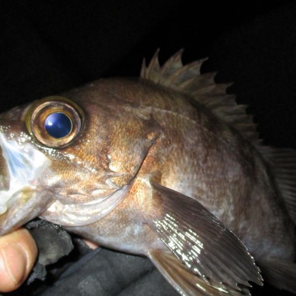 魚心さんのプロフィール