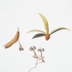 季の花*つれづれノート
