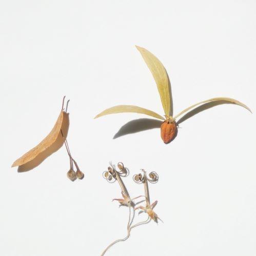 季の花さんのプロフィール