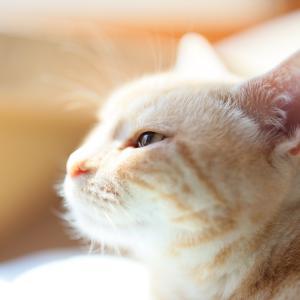 猫写真家 安西政美 のブログ