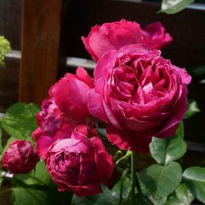 バラ色のミニガーデン