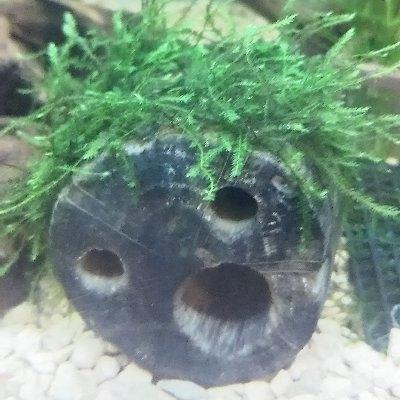moti_aquariumさんのプロフィール