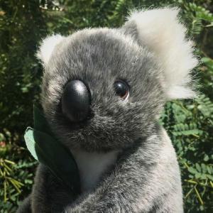 ノーベル君のオーストラリア移住ブログ