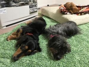 フツーのOLおひとりさま、犬三匹とローコスト住宅で暮らす