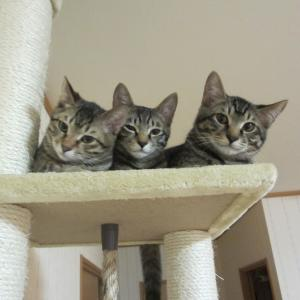 きじとら猫3匹BLOG