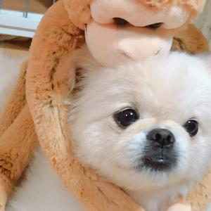 アラサーママのダイエット奮闘記&愛犬のボクとの日常