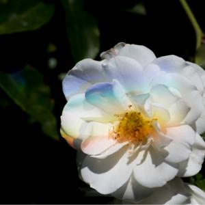 アロマ入門ブログ
