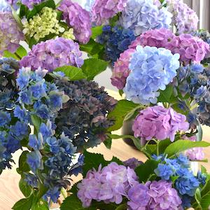 花のあるくらし|長崎
