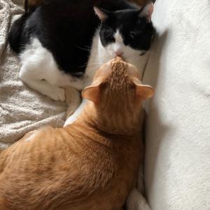 愛猫と旦那と幸せにまったり暮らしちょんよ。