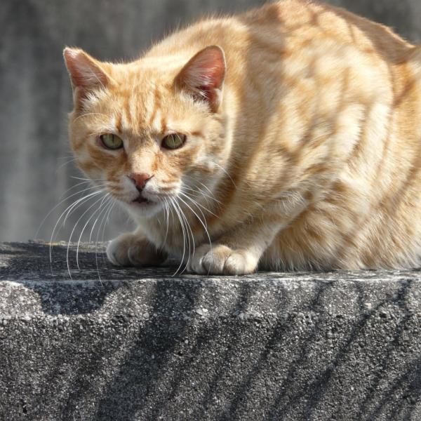 猫先生さんのプロフィール