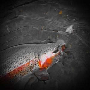 釣りと水槽と、ときどき…農業