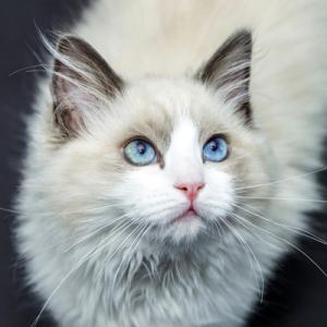 白猫ポッチサービス お得情報事業部