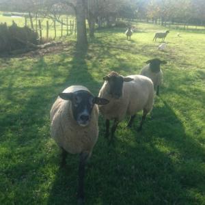 ズボラ主婦がフランスの田舎でシンプルライフを目指すブログ