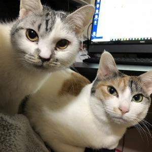 猫と同居。