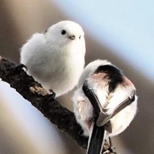 札幌の公園で見かける野鳥たち