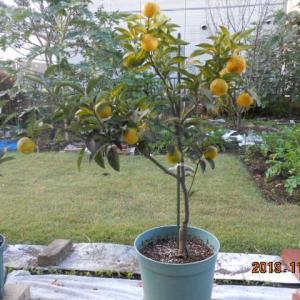 定年後の果樹と野菜の栽培