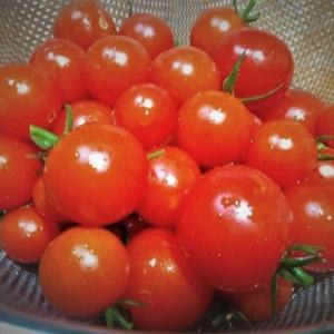 ベランダ菜園の野菜たち