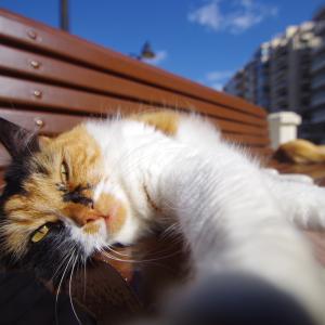 元・旅行業界関係者の旅バカ日記 時々 猫