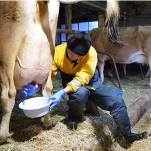 丹波チーズ工房のブログ