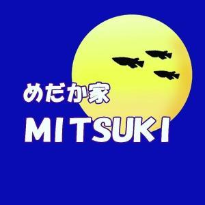 めだか家MITSUKIのブログ