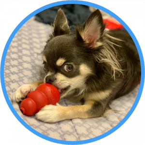 キズナだワン!愛犬を家族と考える人のための情報発信ブログ