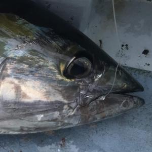 東京湾・相模湾の沖釣りのススメ