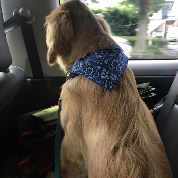 犬の情報館さんのプロフィール