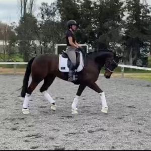 馬場馬術プロ選手を目指す娘の成長記錄
