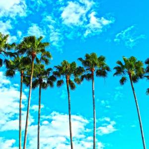 LA Style Navi~ロサンゼルス・スタイル・ナビ~