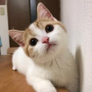 愚息猫マモルの写真美術館