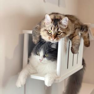 猫とわたしのほっこりブログ