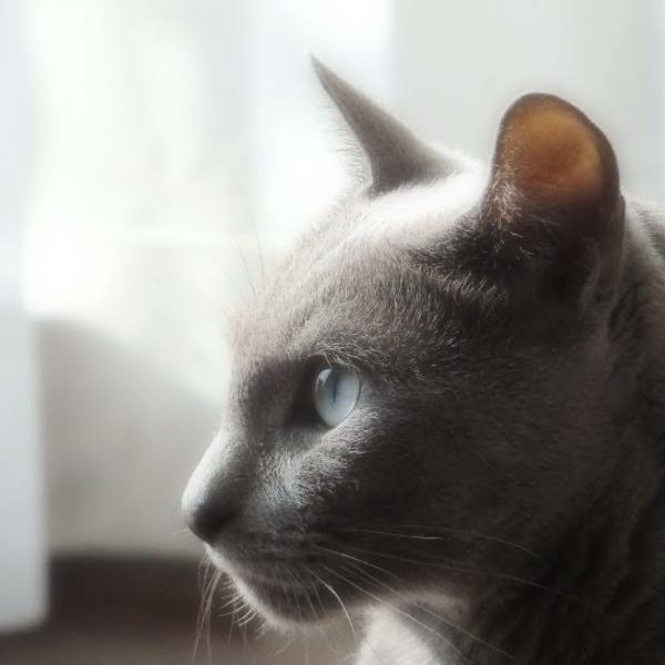 猫飼よしのさんのプロフィール
