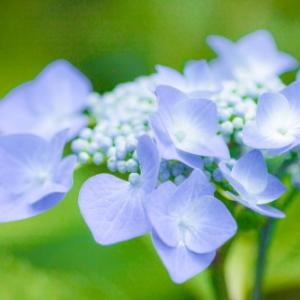 Sucre's Garden ~四季折々の京都~