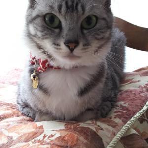 猫とばぁばの情報局