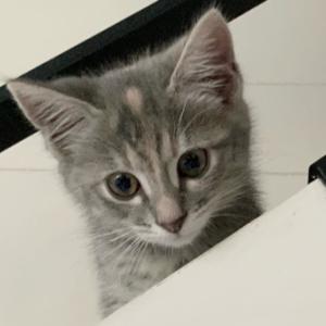お猫さまと珈琲の日々