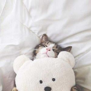 夢猫もぐもぐブログ.☆.。.:*・°