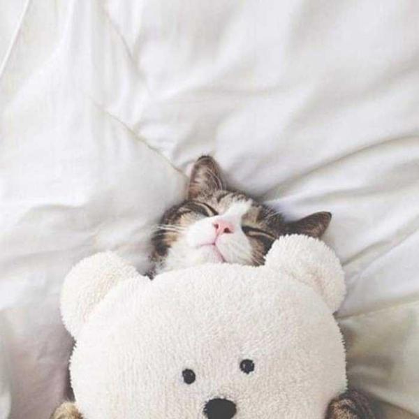 夢猫シロさんのプロフィール