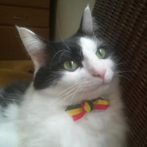 福ふく堂 -猫のおもちゃ箱-
