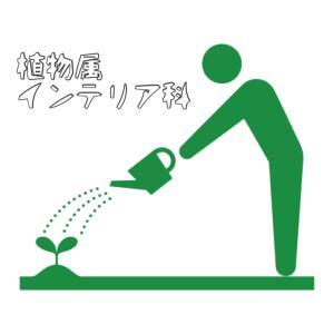 植物属インテリア科
