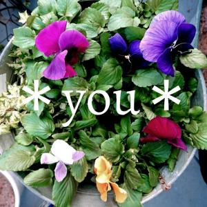 *you*garden&life*